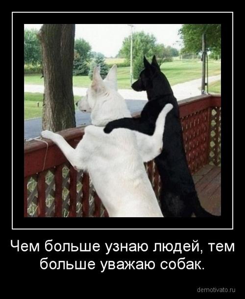 картинки очень про и котов смешные собак