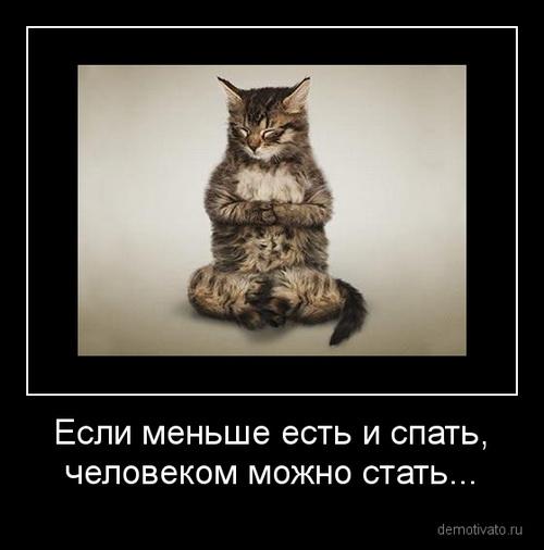 собак  котов и очень картинки смешные про
